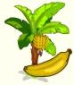 Banana-Rwd