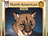North American Cougar