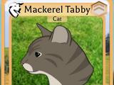 Mackerel Tabby