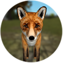 Ss fox