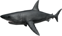 Roblox Shark Bite Codes 2018 July 28th Roblox Sharkbite Codes 2018 July Robux Promo Codes August 2019 Live