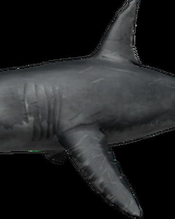 How To Get Unlimited Money In Shark Bite Roblox Shark Bite