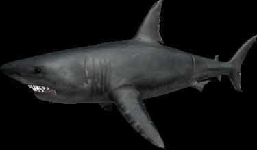 Great White | Roblox Shark Bite Wiki | Fandom