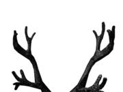 Category Antlers Roblox Wikia Fandom