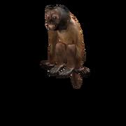 Dexter monkey