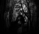 The Ghost of Aokigahara