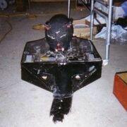 Tuka The Cat
