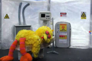 Big Bird Flu