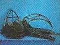Mantis S7
