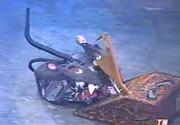 Falcon vs 6 million dollar mouse