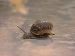 FBT Snail