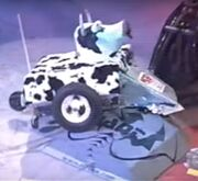 Manta Mad Cow Bot