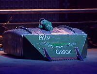 Ally gator