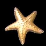 Starfish topper icon
