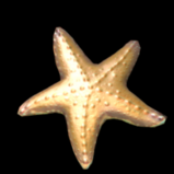 Starfish topper icon