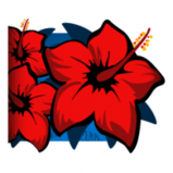 Hibiscus player banner icon