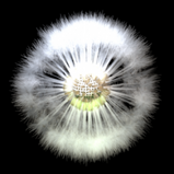 Dandelion Seed antenna icon
