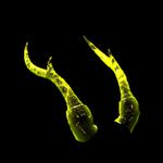 Qilin Horns II topper icon