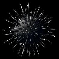 Sibaung insignia sea urchin TI