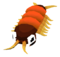 Baby Centipede