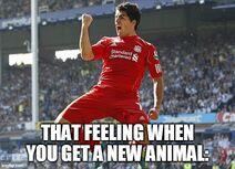 New animal excitment