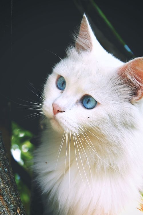 Sleek Silver Cat With Blue Eyes