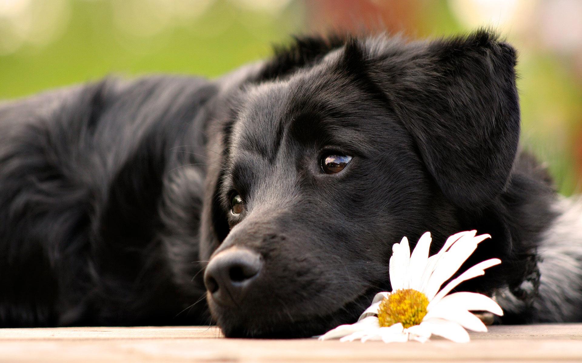 Resultado de imagem para BLACK DOG