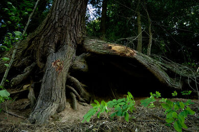 Under the tree roots by eyefeather stock-1-
