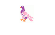 Pigeon pet