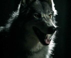 File:Werewolf283px-WerewolfMason.png