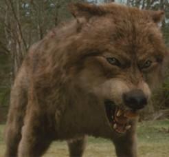File:WerewolfWolfbeforeafter-560x460 (2).jpg