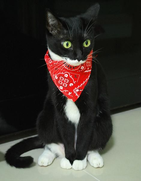 Кошка с котенком картинка для занятий стоит забывать