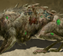 Giant Diseased Rat