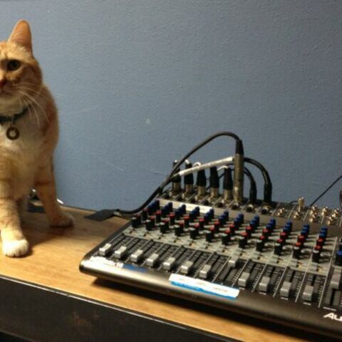 Joe the Cat photographed before a podcast by <a href=