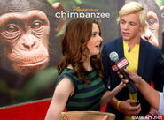 Chimpanzee4