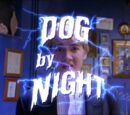 Dog by Night
