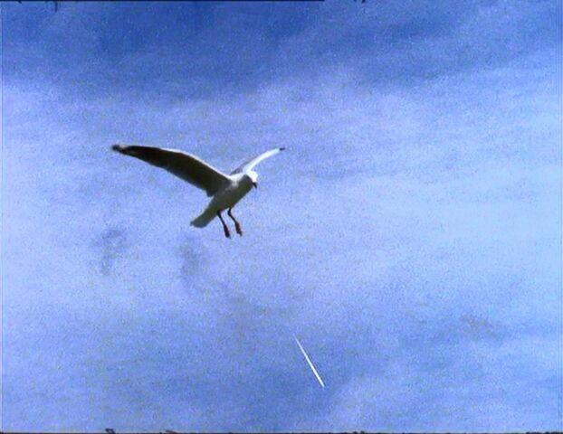 File:Birdsdo-50.jpg