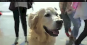 Winston dog