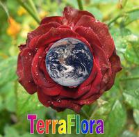 TerraFlora