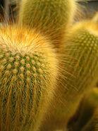 Cactus closup