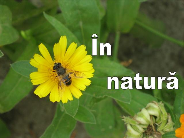 Fișier:În natură.png