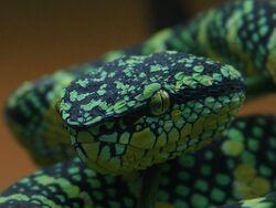 Jade Serpent