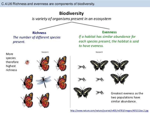 What process accounts for species diversity example — Bitbucket