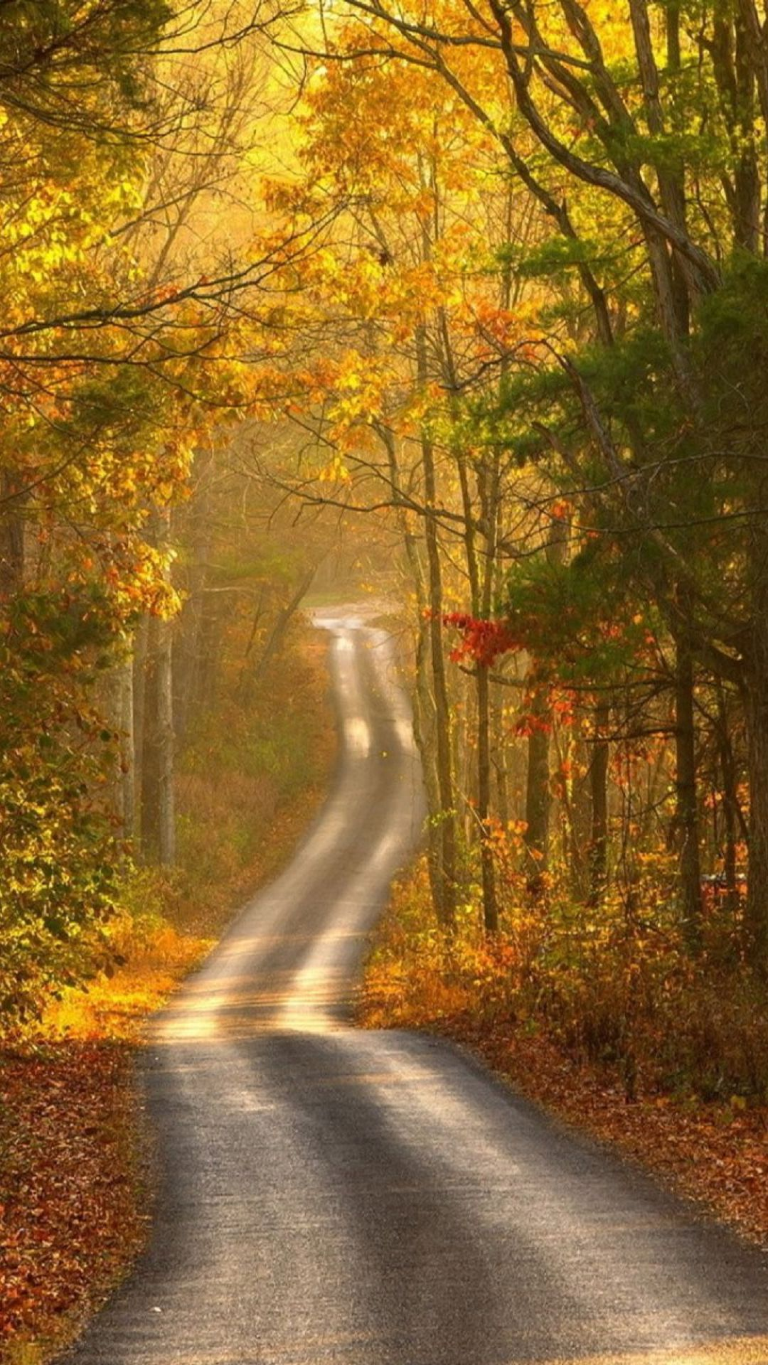 autumn forest path android wallpaper