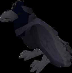 Raven (blue crested) pet