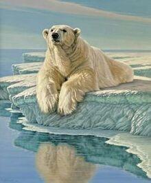 Iorek Arctic bear