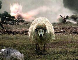 The-Sheep-of-War-672