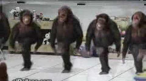 FUNNY irish monkeys