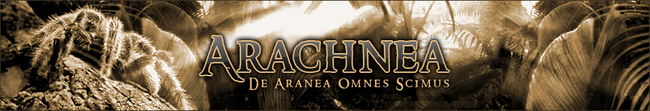 Arachnea logo
