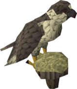 377px-Gyr Falcon